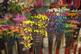 Thai Dried Flowers